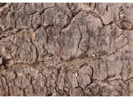 Old dry bark texture