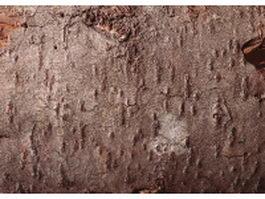 Mature tree bark texture