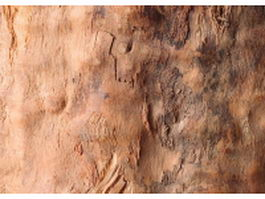 Surface of cut tree trunk texture