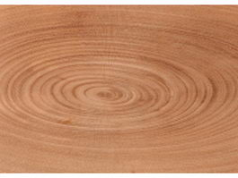 Growth rings of a tree texture