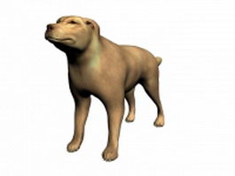 Domestic dog 3d model