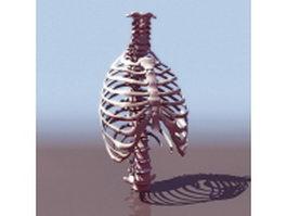 Thorax bone anatomy 3d model