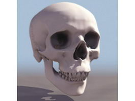 Human skull anatomy 3d model