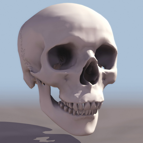 Human skull anatomy 3d model 3ds files free download - modeling ...