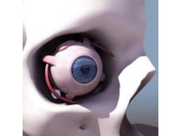 Anatomy of eye 3d model