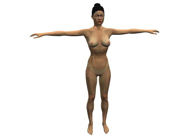 Female body anatomy 3d model 3dsMax files free download - modeling