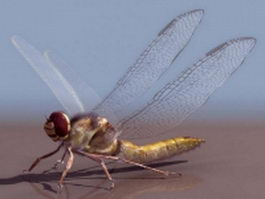 Adult dragonfly 3d model