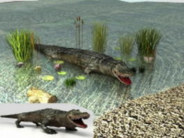 Crocodile in water 3d model