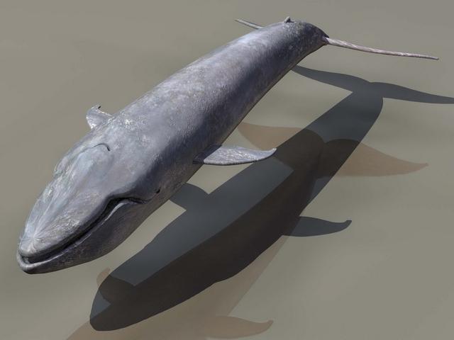 Blue Whale 3d Model 3d Studio Files Free Download