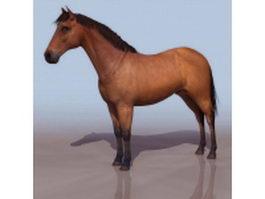 Morgan horse 3d model
