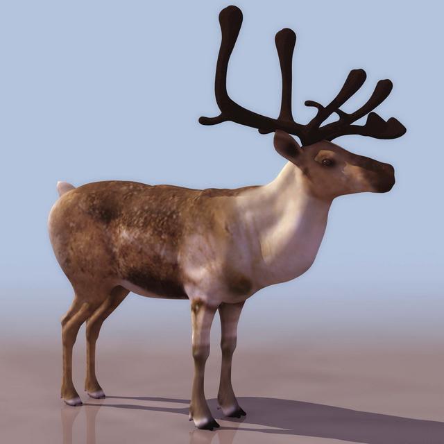 Low poly forest reindeer 3d model 3D Studio files free download