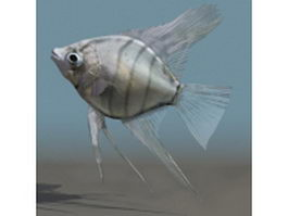 Silver angelfish 3d model