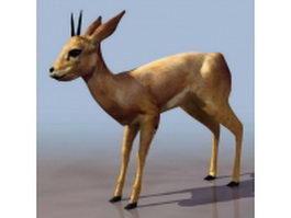 Blackbuck antelope 3d model