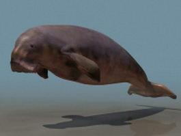 Marine mammal Dugong 3d model
