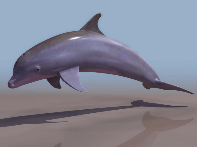 How to create dolphin textures