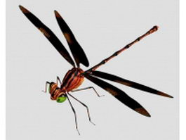 Red dragonfly 3d model