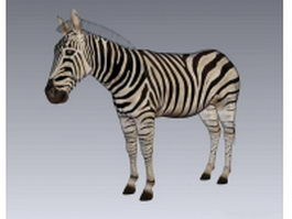 Mountain zebra 3d model
