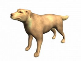Yellow lab dog 3d model