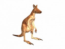 Antilopine kangaroo 3d model