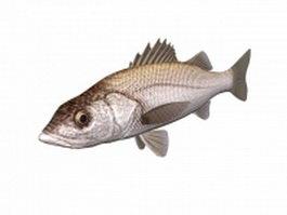 White seabass fish 3d model