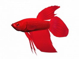 Red Betta splendens 3d model