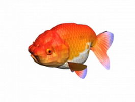 Ranchu goldfish 3d model