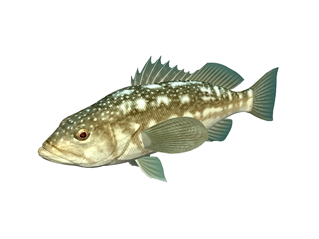 Kelp bass fish 3d model 3ds max files free download for Bass fishing 3d