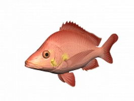 Red salmon fish 3d model