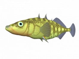 Smallhead stickleback 3d model
