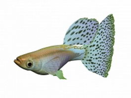 Blue grass guppy 3d model