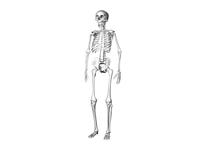 Human skeleton 3d model 3ds max files free download - modeling 21089