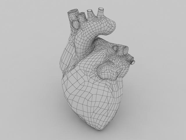 Human heart 3d model - CadNav