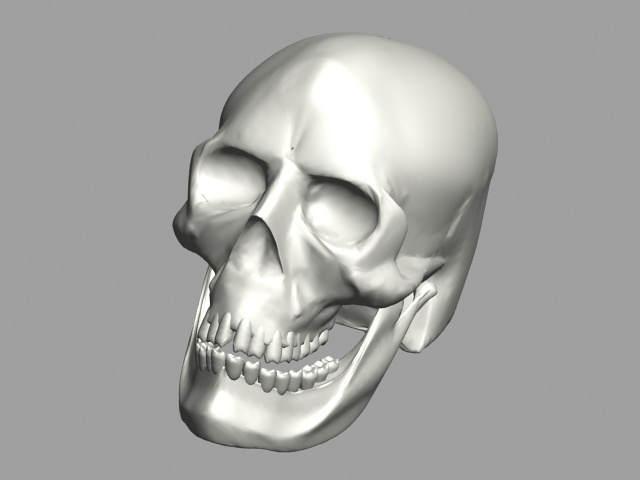 Human skull 3d model 3ds max files free download ...