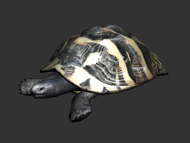 Florida Box Turtle 3d Model 3ds Max Files Free Download