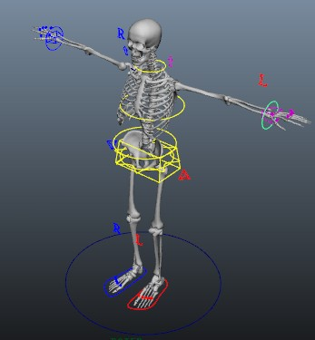 Skeleton rigging 3d model Maya files free download - modeling 23319 ...