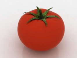 Hothouse tomato 3d model