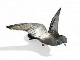 Feral pigeon 3d model