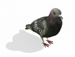 Columbidae bird 3d model