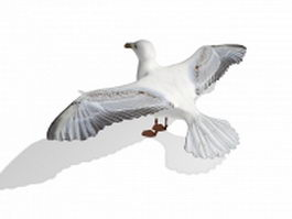 White wild duck with spread wings 3d model