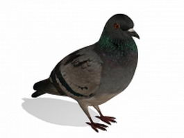 Gray pigeon 3d model