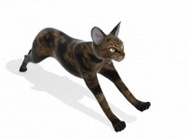 Domestic short-haired cat 3d model