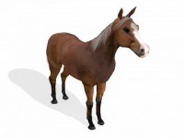 Arab horse 3d model