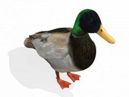 Male mallard duck 3d model