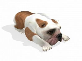 English Bulldog 3d model