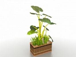 Potting bonsai plants 3d model