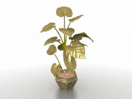 Potted elephant ear plants 3d model