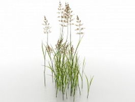 Water reed plants 3d model