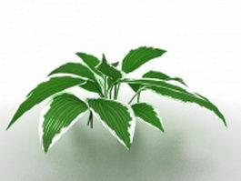 Dieffenbachia house plant 3d model