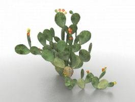 Opuntia cactus plant 3d model