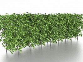 Box hedging and topiary 3d model